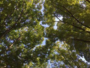 代々木公園やりたい事受け入れる